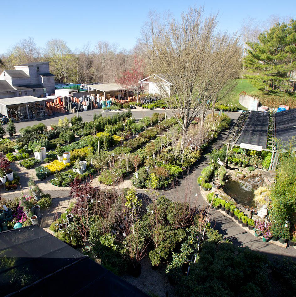 hamptons garden center
