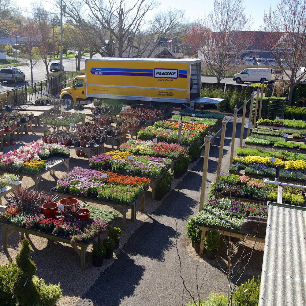 Hamptons garden center for Lynch s garden center