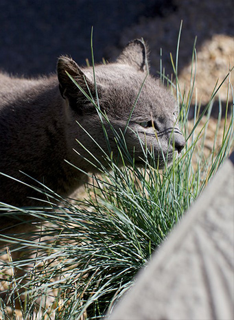 Next time you're in the yard, keep an eye out for Smokey, our resident kitty!